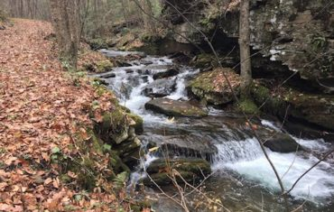 Ott Fork and the Elusive Wolf Path